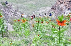 Цветение в горах. Фото В.Ушакова